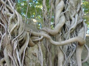tree roots 1